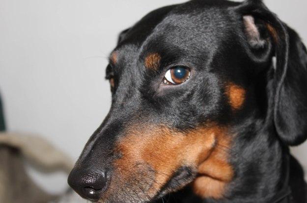 deadlyinlove blog awesome dog