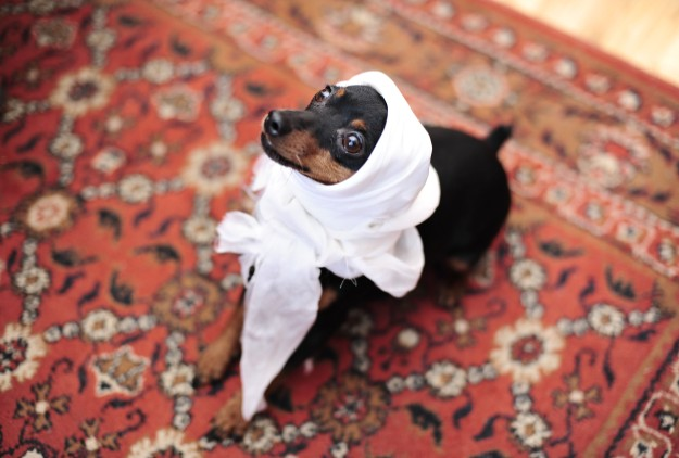 deadlyinlove blog awesome russian dog