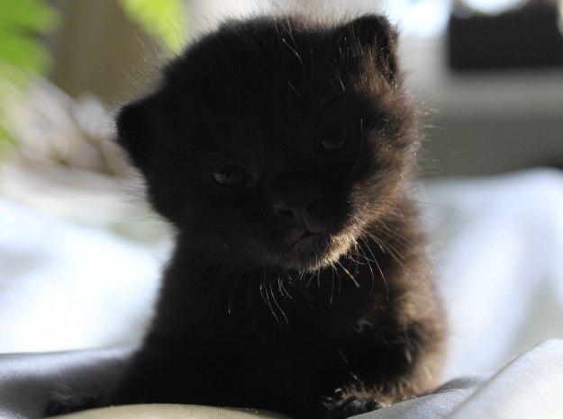 deadlyinlove blog cute kitty