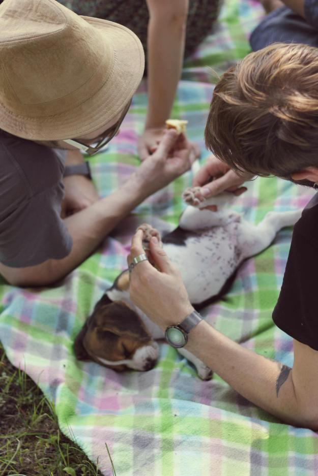 poncho picnic beagle